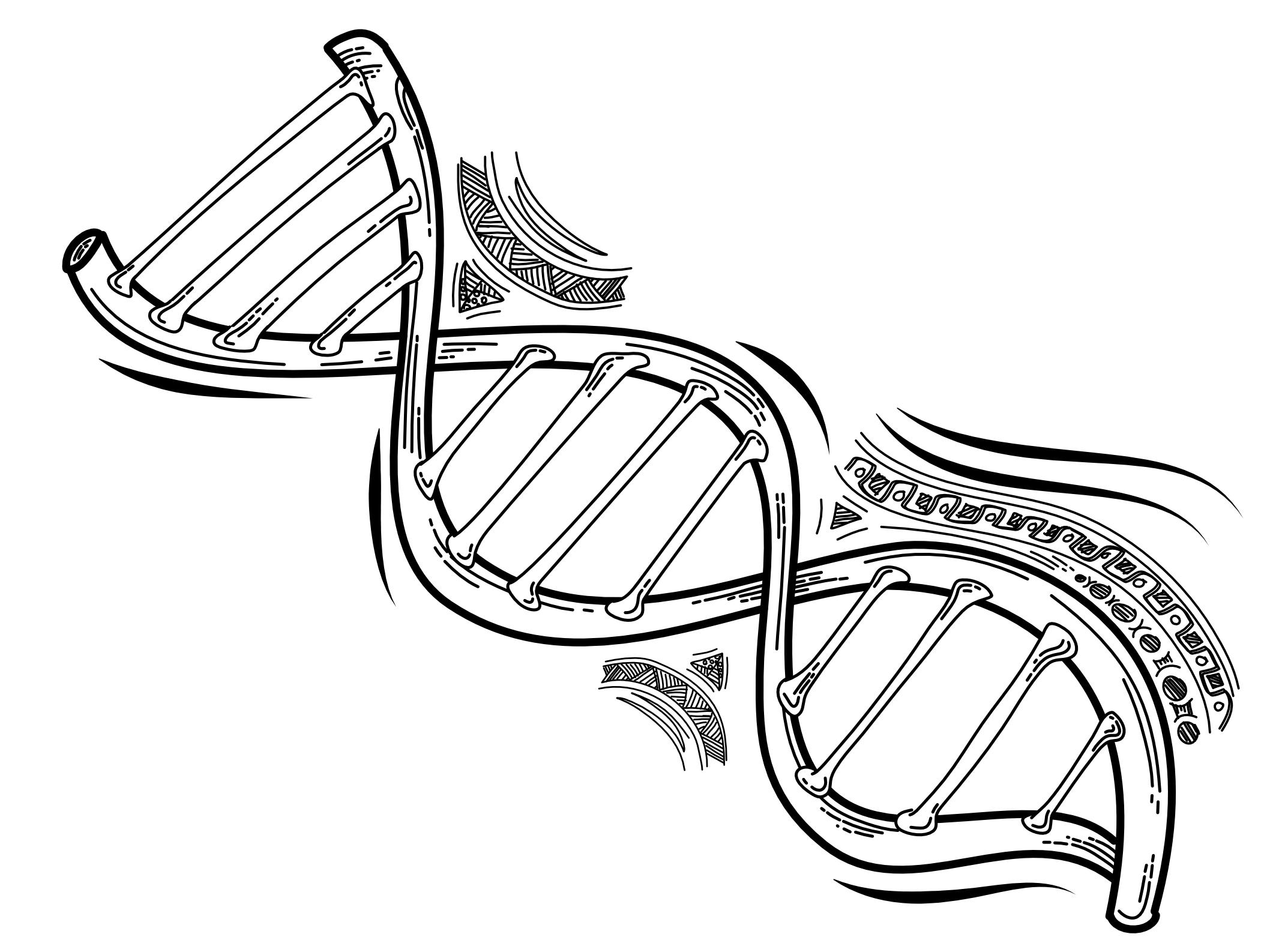 onewildcard-DNA@2x